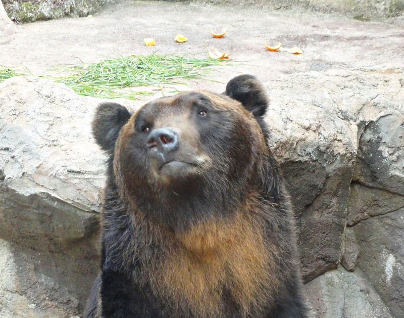 Sad bear at Ueno Zoo