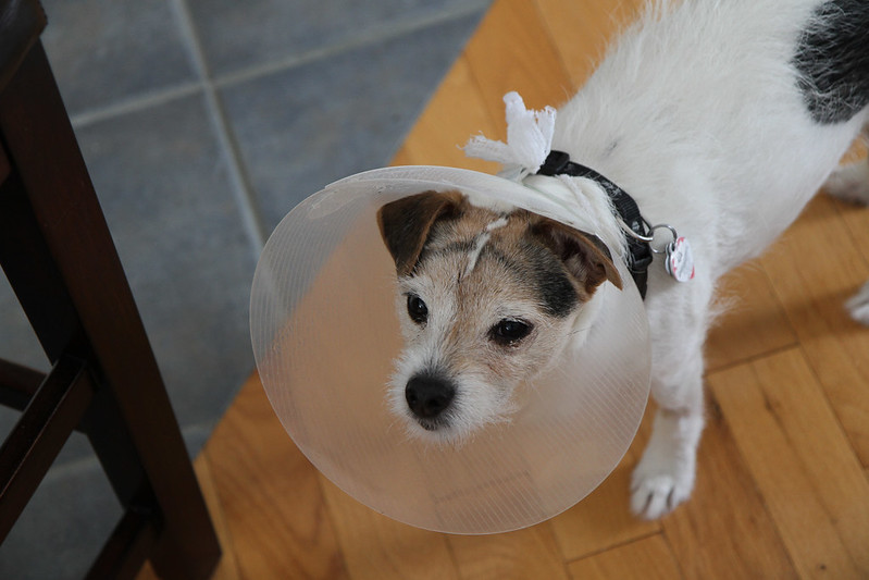 cone of shame2