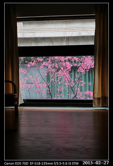 2015_0227Cherry_Blossom2