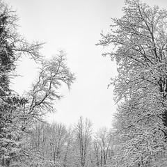 #winterwonderland everywhere I look.