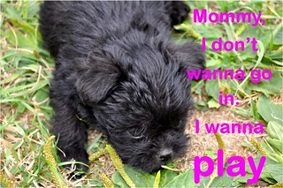 puppy words