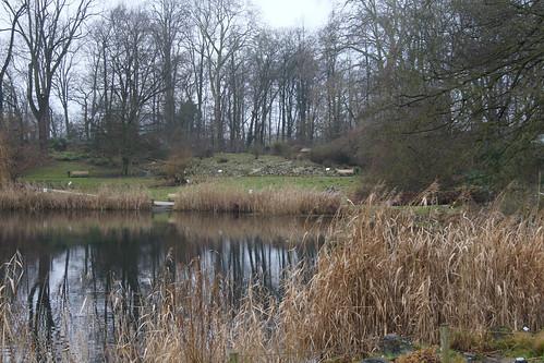 Lake at the Garden