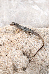 Chasing Geckos