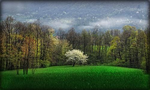 verde primavera alberi spring natura ciliegio luserna