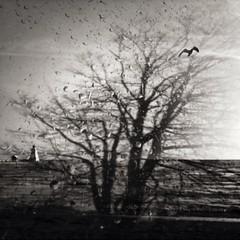 Rain, wash away my yesterday! #beach #tree #bird #rain  #composite #blackandwhitephotography