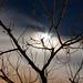 Luna entre las ramas 1
