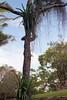 Tree by photogreuhphies
