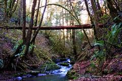 Balch Creek | Forest Park