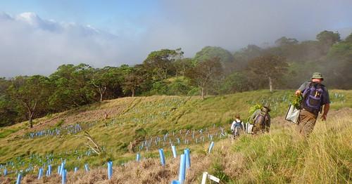 Volunteers walking across the Nakula landscape.