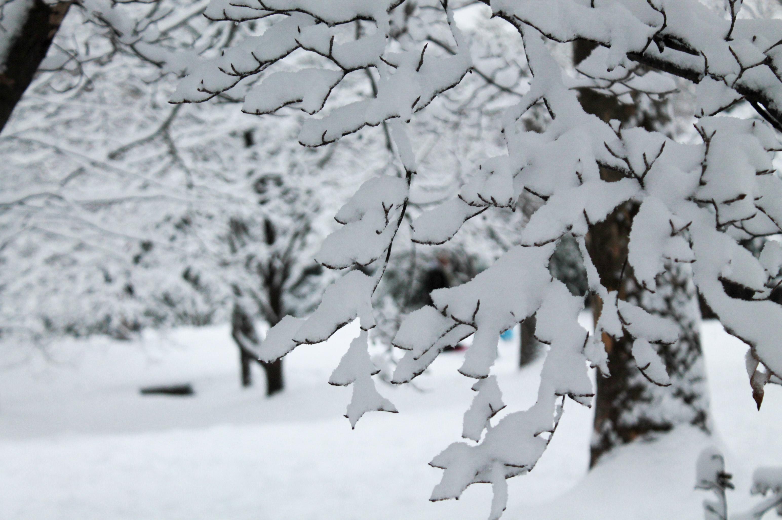 Snow-Day-Meridian-Hill-Malcolm-X-Park-Washington-DC-9.jpg