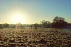 Hatfield Forest Walk