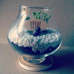 HIYA #thebellwether #plantflair #hiya