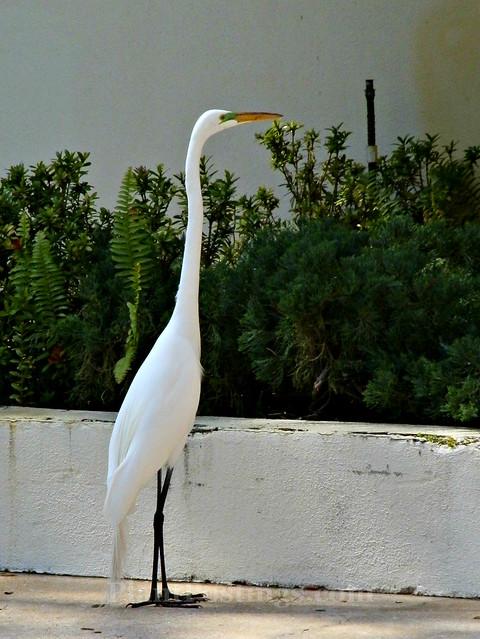 egret 2