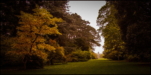 autumn trees fall landscape woods colours sony westonbirt giants aboretum tetbury