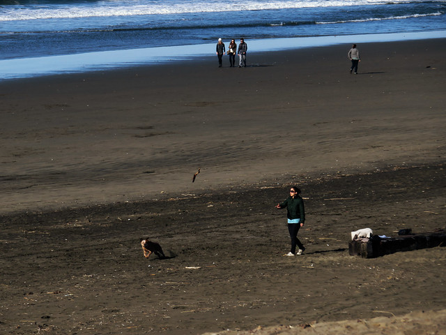 woman with dog, throwing a stick; Ocean Beach, San Francisco. January 1, 2015