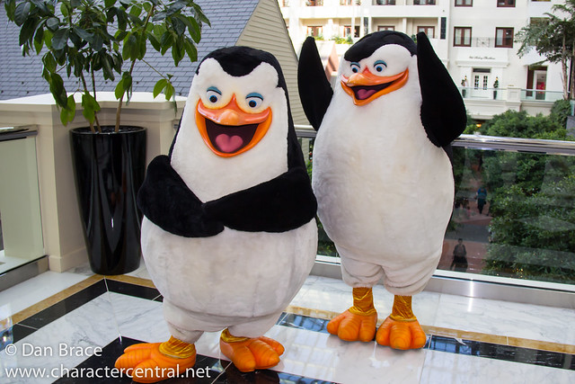 Meeting the Penguins of Madagascar