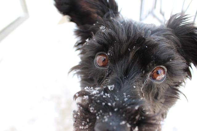 Snowy Day- KLS (22)