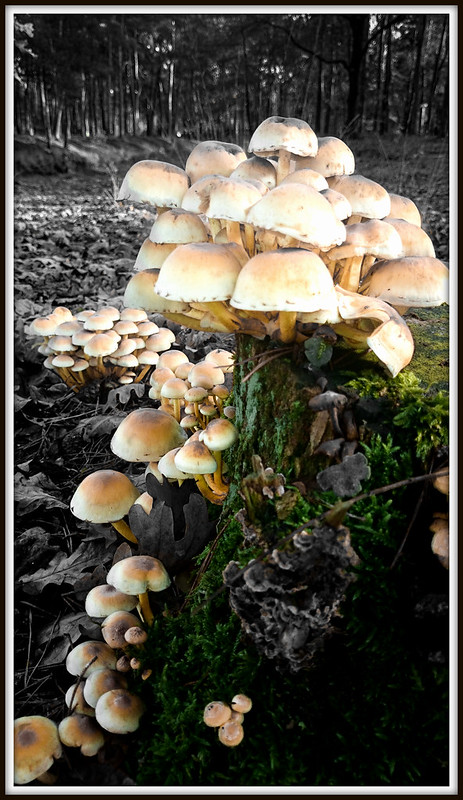 Mushrooms (24-11-2014)