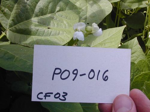 P09-016 CF03 Fl2