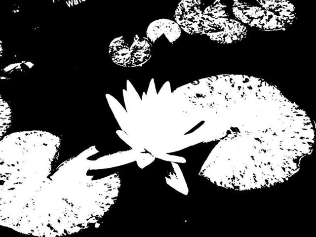 Stencil Lily