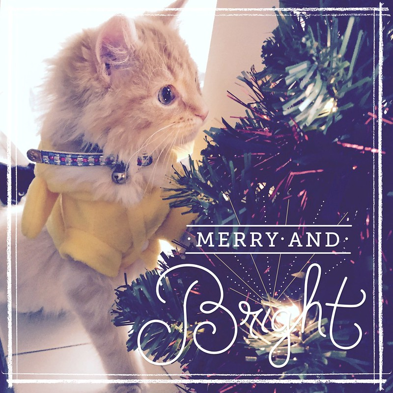 Wishing you all a wonderful and joyful Christmas. Be merry and be bright!