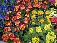 Spring at Swanson Nursery