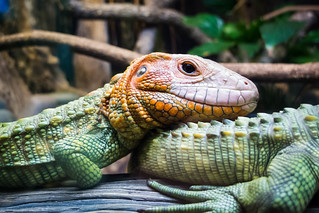 Reptiles at the Zoo