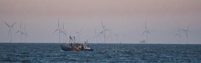 ocean harvest 434 (48)