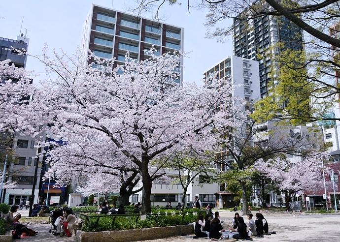 13 大阪賞櫻景點 堀江公園 味處和風亭
