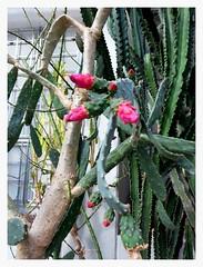 Jardín Botánico de Madrid en febrero