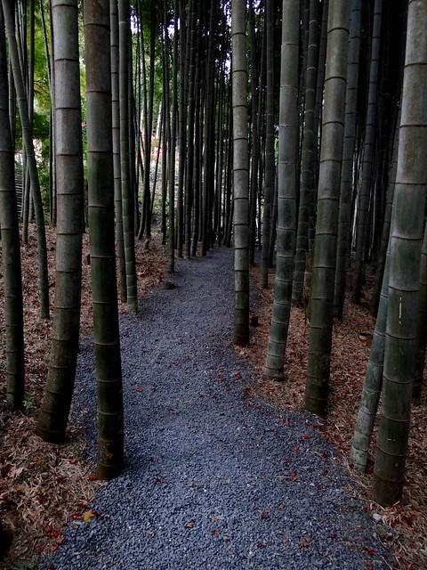 Kyoto Momiji 2014 Ichijoji 169