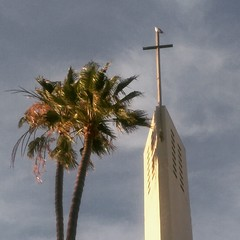 Seagull was sitting on top of the bell tower as the bells were ringing. #losangeles #LAX #Lutheran #birds #church #tree