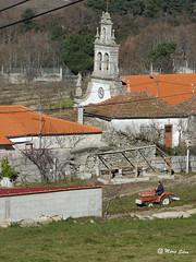 Águas Frias (Chaves) - ... lavrando ... com a torre da Igreja ao fundo ...