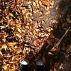 {crunch} :leaves::fallen_leaf::maple_leaf::mushroom: