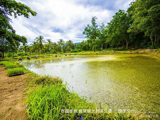 泰國華欣 農業觀光推廣公園 55