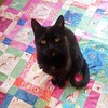 Like moths to the flame are cats to the quilting layout. #helperkitty #weewander #quilting