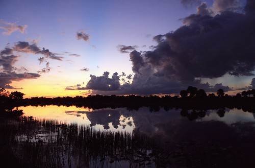 trees sunset usa lake reflection nature beauty silhouette dark skyscape landscape golden colorful moody unitedstates natural florida threatening shoreline brooding stillwater curve canopy glimmer sheen cloudscape levels fronds stormclouds southflorida afterglow sawgrass naturephotography palmbeachcounty readytorumble cloudformations lakescape 10114 cabbagepalms thesmellofrain nightskylight floridastatetree artisticsunsetphotography