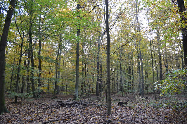 Jungfernheide Forst Berlin_ trees and forest floor with autumn leaves