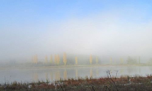 Wetlands Fog, second try