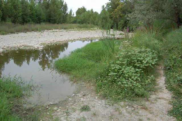 Passeggiata crostolo lato Rivalta (18)