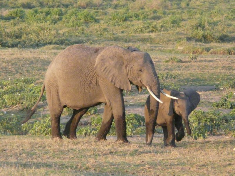 Kenia2007-0767