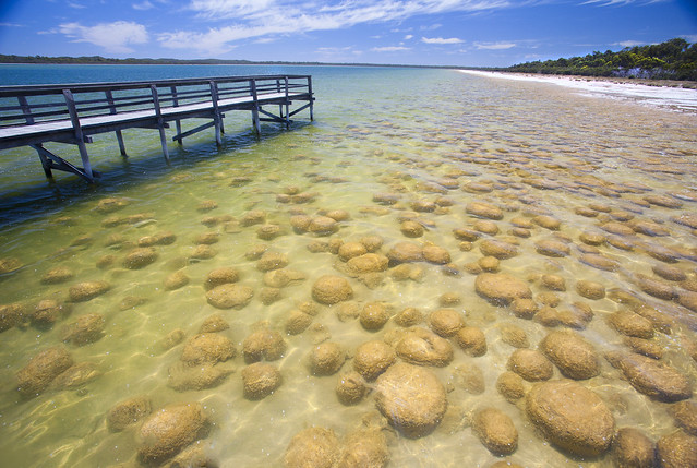 Living Fossils: The Thrombolites of Lake Clifton