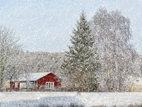 winter red house snow tree forest season landscape scenery sweden country bessula coth5