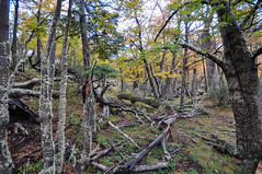 Lush vegetation at the Glaciares National Park