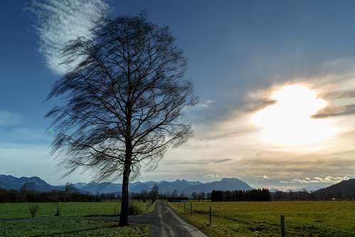sunset sun storm tree clouds landscape schweiz wind rheintal schnitzler
