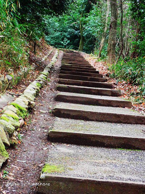 最初は登り易い道が続いていました