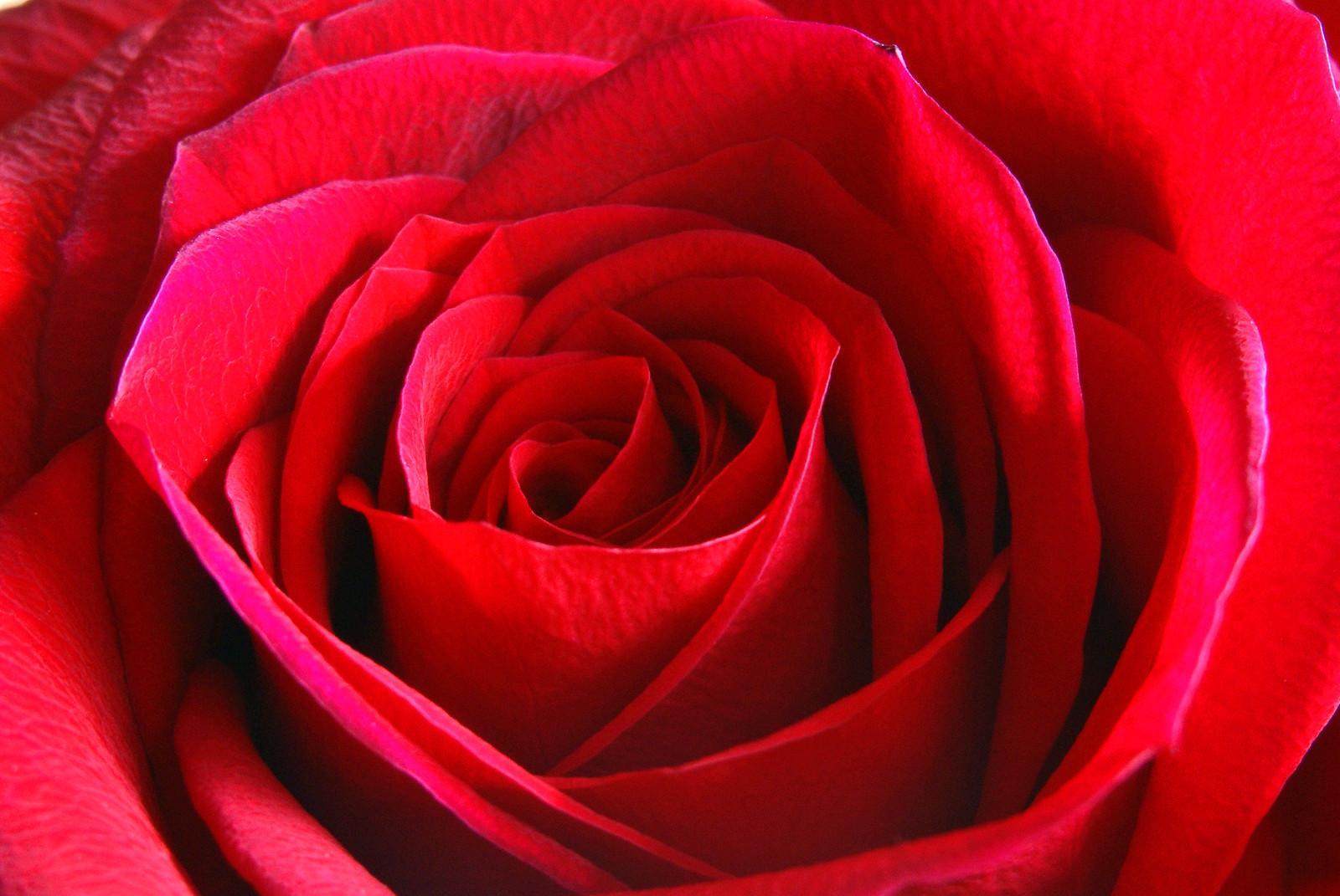 Valentines Red 2
