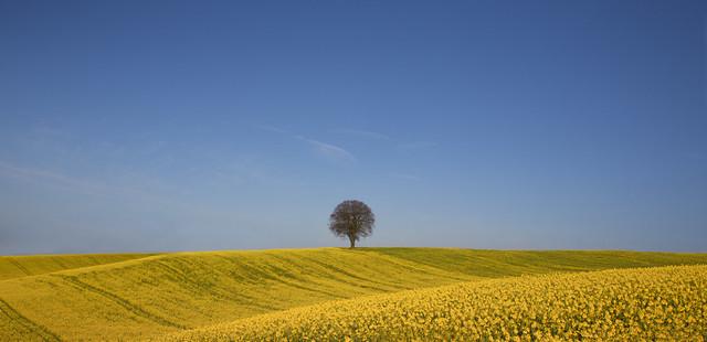 Tree in Yellow Landscape