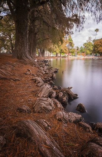 longexposure trees nature water landscape outside downtown fuji riverside outdoor branches roots wideangle southerncalifornia ultrawide fujinon fairmountpark apsc xt1 mirrorless 365challenge remotetrigger lakeevans 10stopndfilter benrotripod fujinonxf1024f4ois
