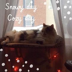 #snowday, #catsofinstagram